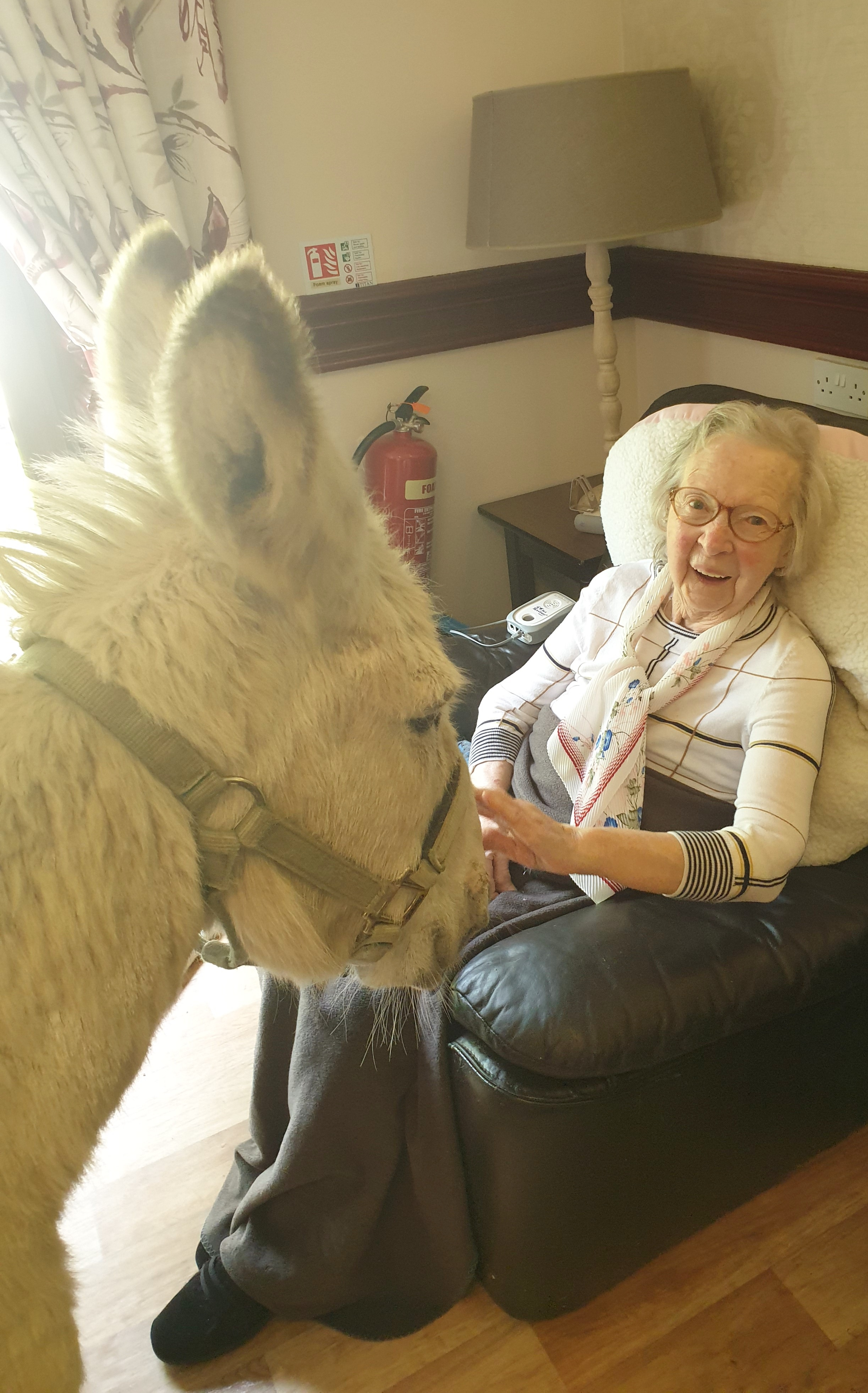 , Therapy Donkeys are mane attraction at Skelmersdale Care Home, Skem News - The Top Source for Skelmersdale News