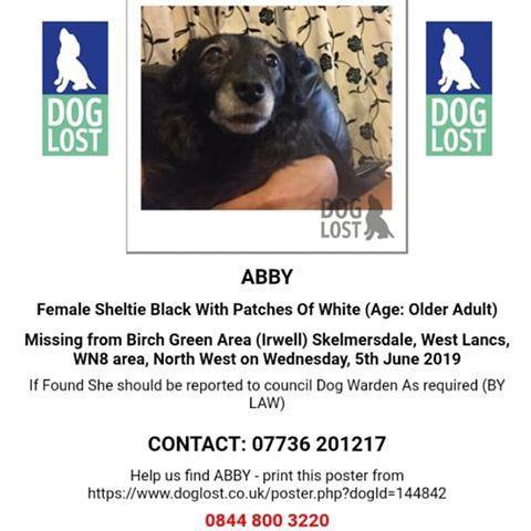 , Appeal to help find missing dog from Skelmersdale, Skem News - The Top Source for Skelmersdale News