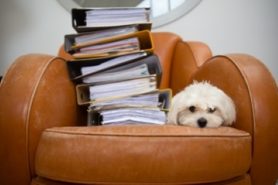 bring, It's Bring Your Dog To Work Day this Friday – how to join in the fun, Skem News - The Top Source for Skelmersdale News