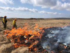Wildfire burn team