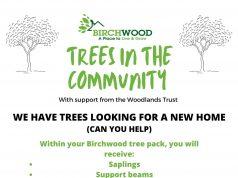 trees birchwood
