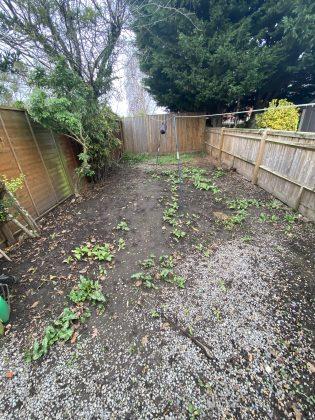 The garden, before